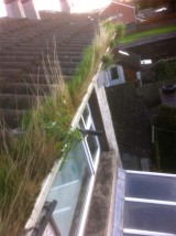 Before gutter cleaning by G M Window Cleaning Services, Cork, Ireland